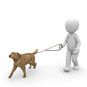 dog-1015660_1280