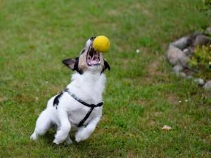 dog-863524_1280