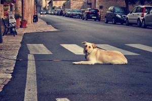 dog-1263152_640