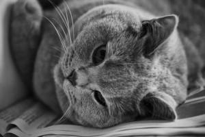 cat-1598437_640
