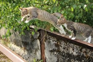 cat-912291_640