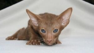 kitten-408798_640