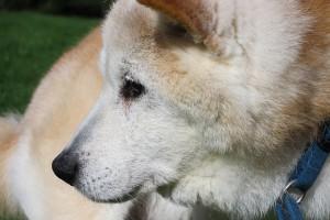 old-dog-1292304_640