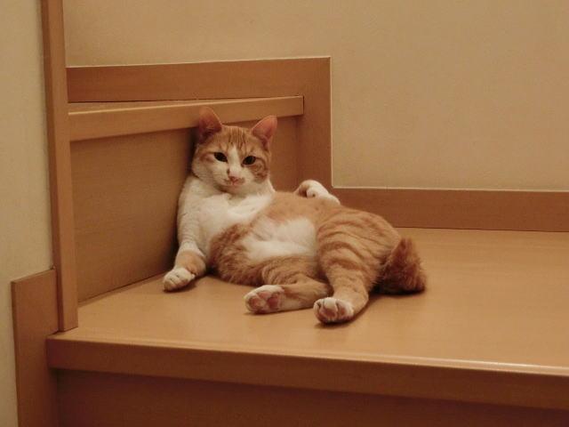 獣医師の考えや猫に対する想いがあっての傷