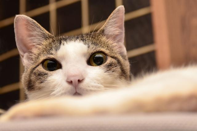 猫の匂いを消す