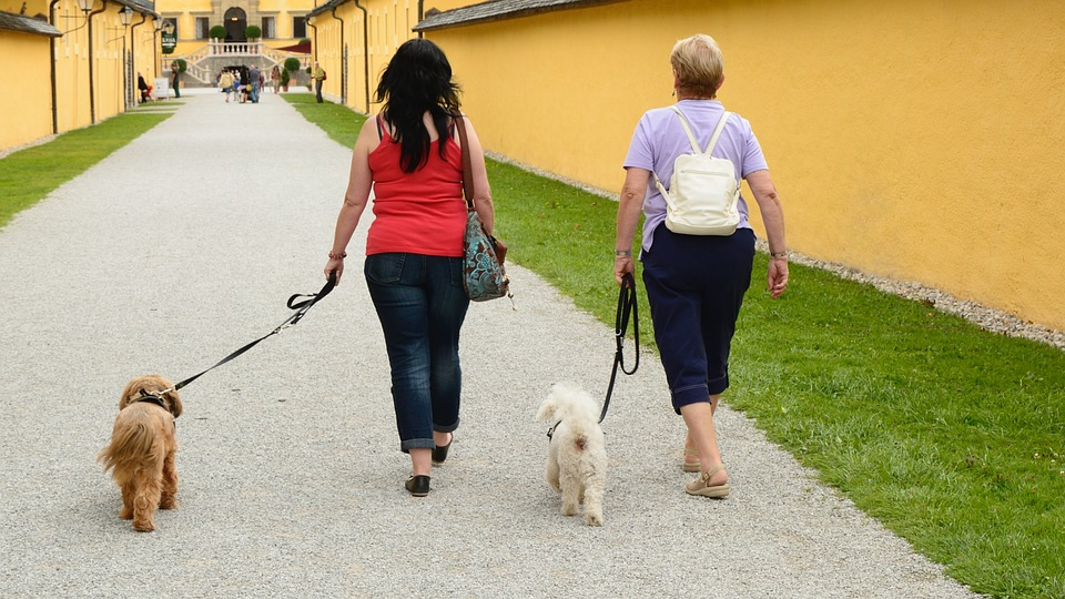 動物病院に散歩