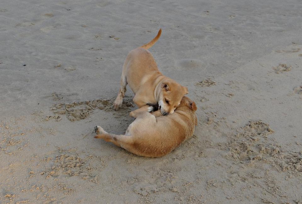 けんかする犬