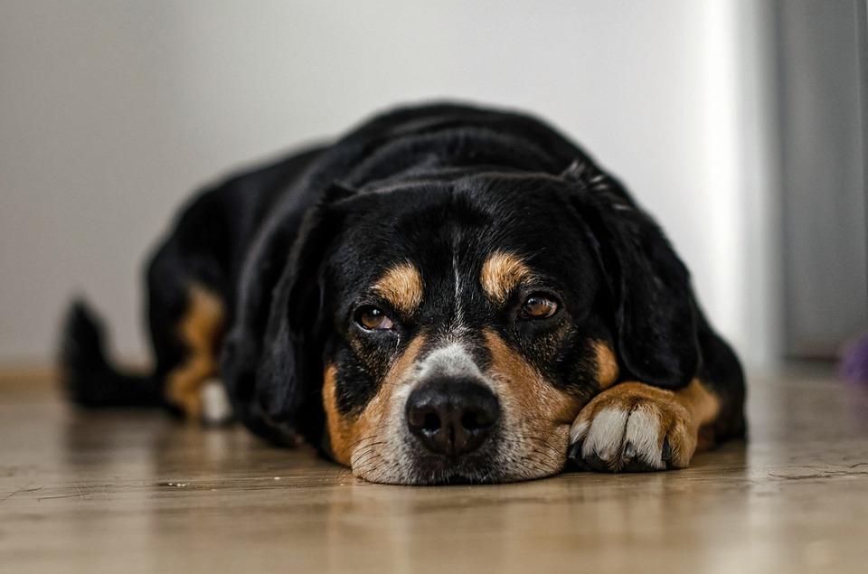 気持ち悪い犬