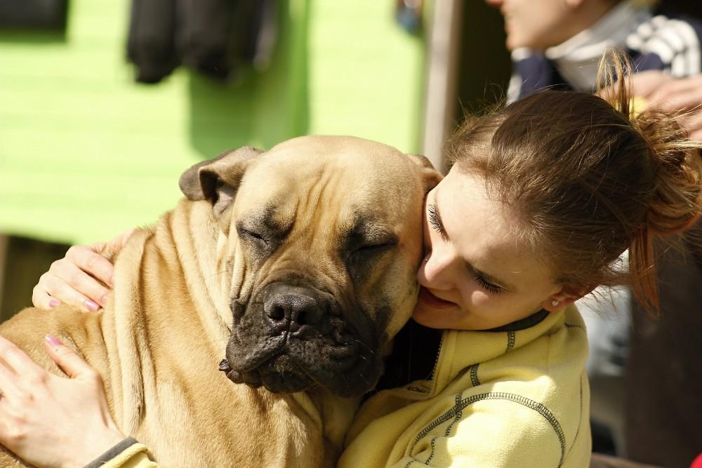 大型犬と飼い主