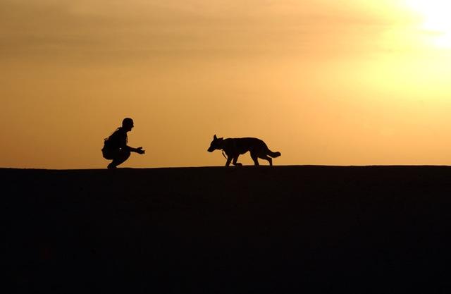 夕暮れの犬散歩