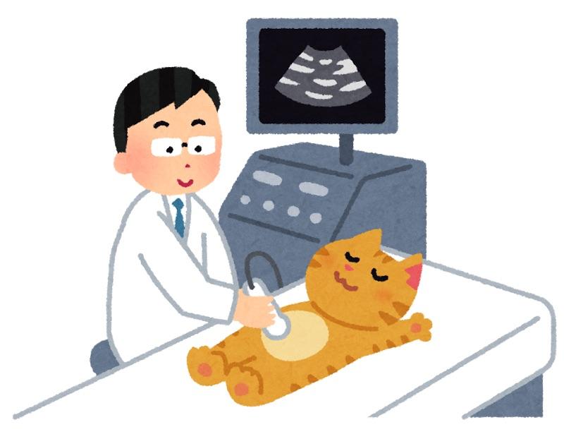 猫の超音波検査