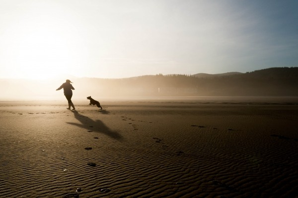beach-dog-chase-play-fun-happy-joy-pet