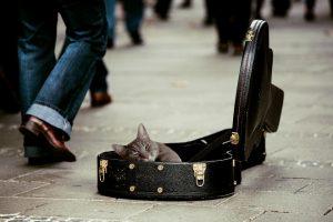 ギターケースに入る猫