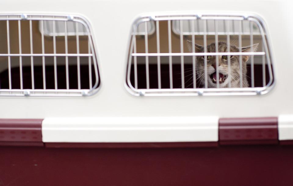 ケージに入る猫