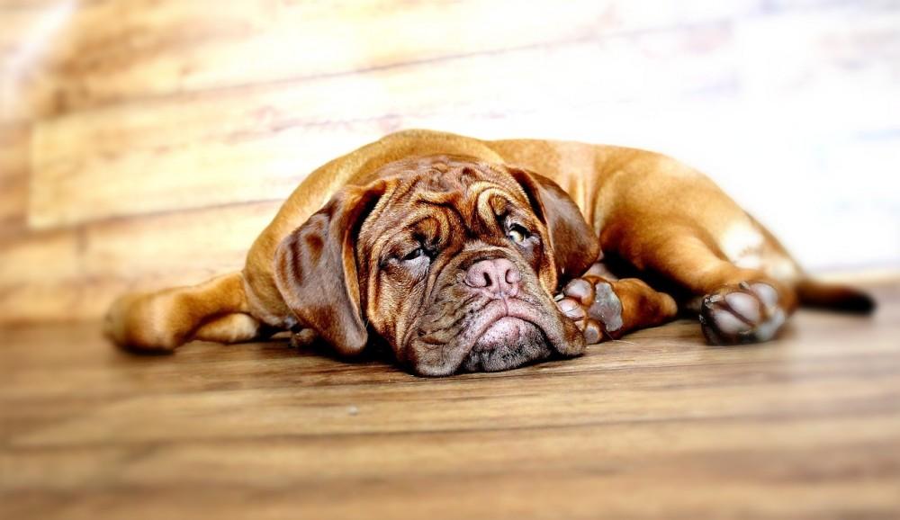 寝てる 犬