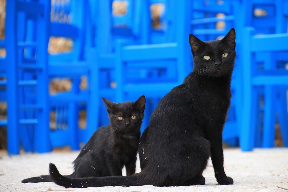 多頭 猫 ワクチン